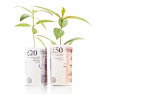 Concept of green plant grow on British Pound currency note.