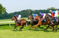 risk management, horse racing