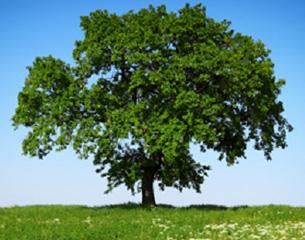 Tree - thumbnail