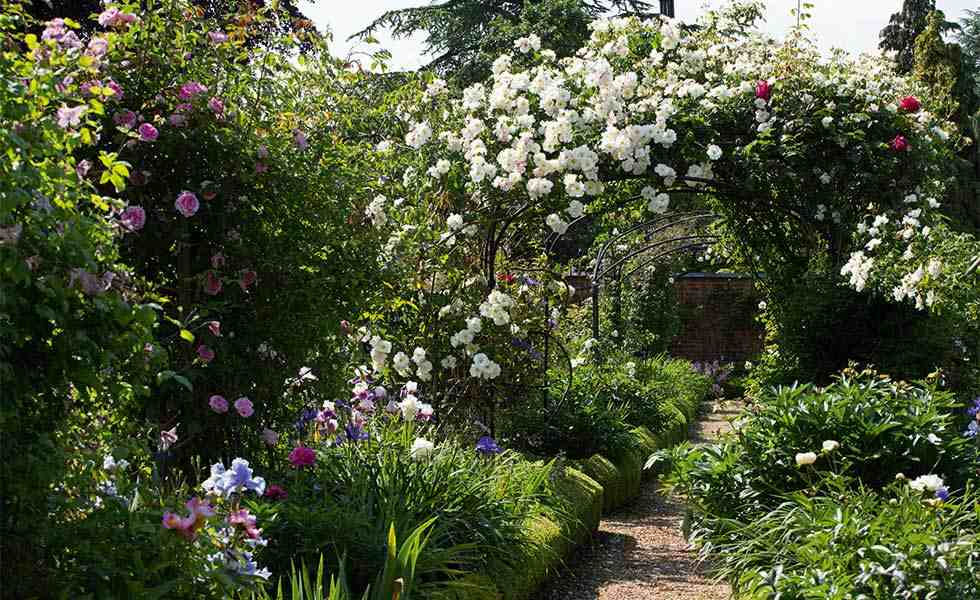 garden with beds of roses