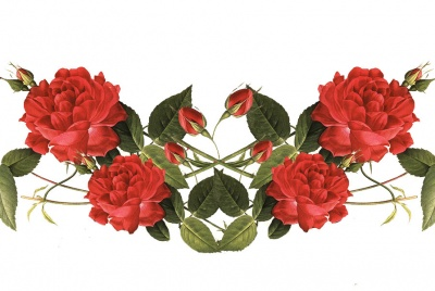 Rose garland flowers for valentines day