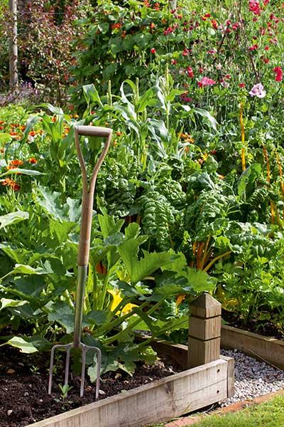 kitchen garden with fork