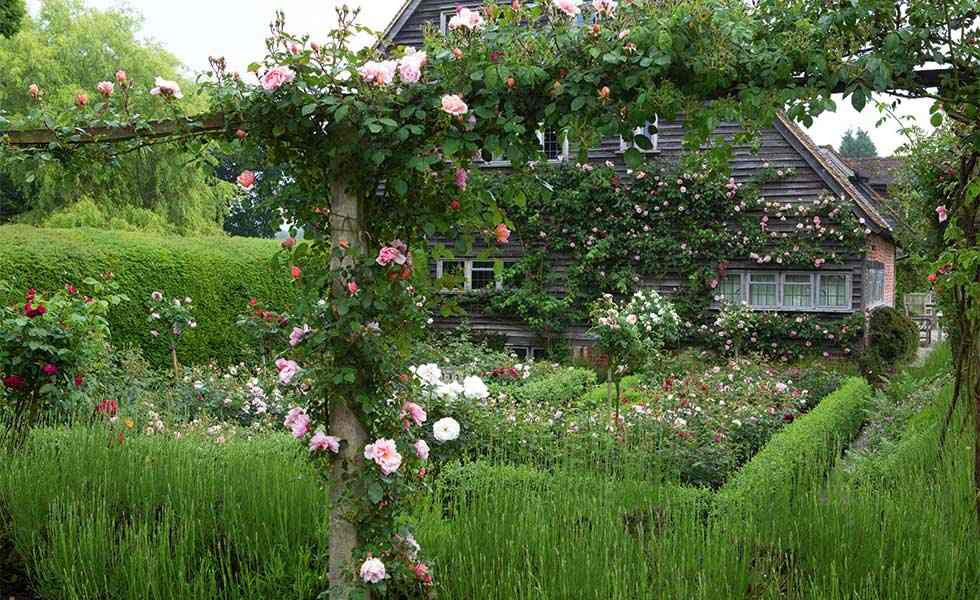 How To Grow A Rose Garden - Period Living