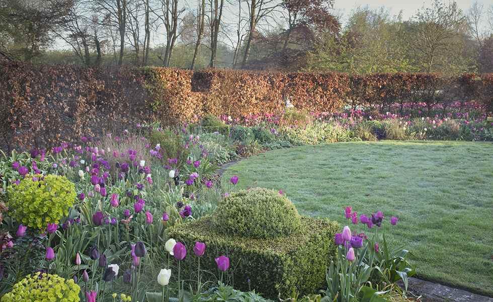 tulips garden borders
