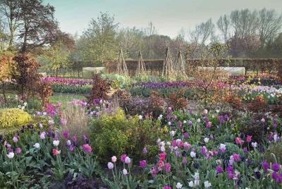 tulips garden view