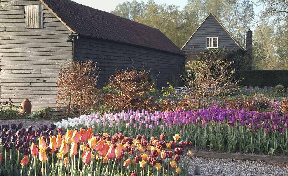 tulips garden multi coloured by barns