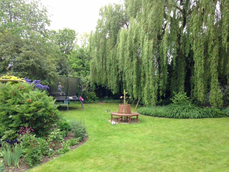willow tree in garden of listed Georgian property