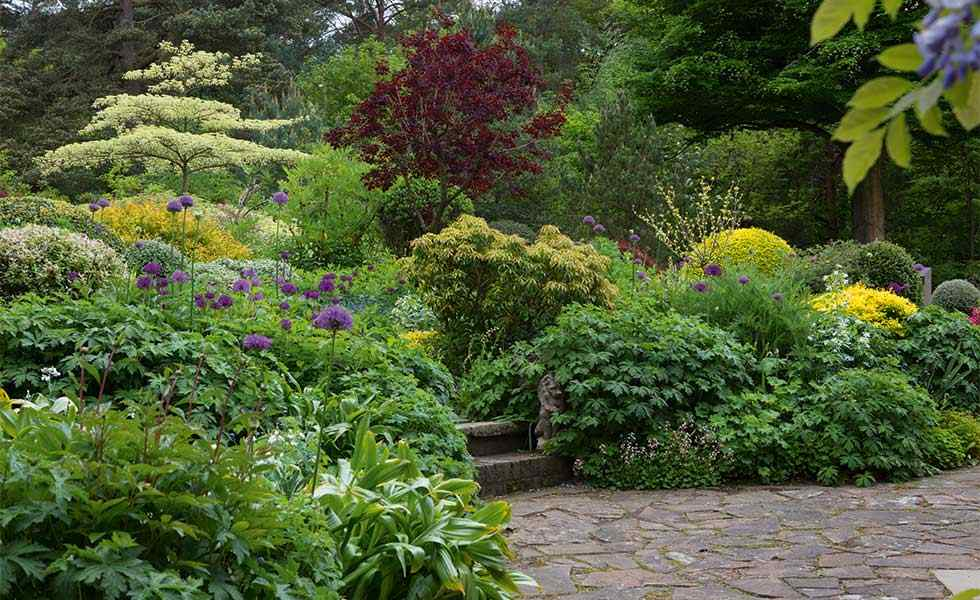 garden with variegated greens