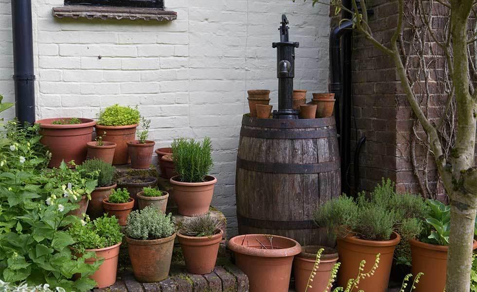 garden corner with pots of herbs