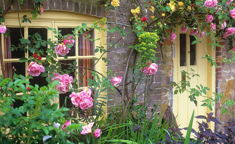 climbing roses by cottage doorway