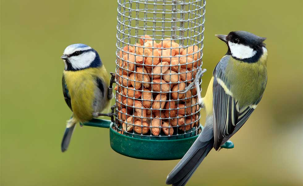 Feed-birds-in-your-garden-during-the-winter-months