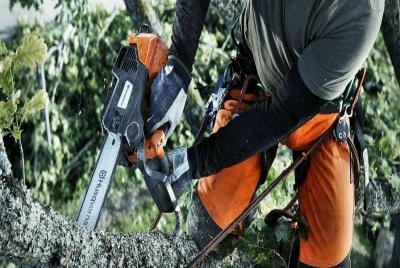 chelford farm supplies chainsaw