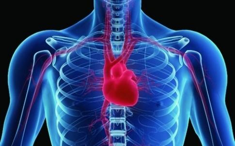 TE heart