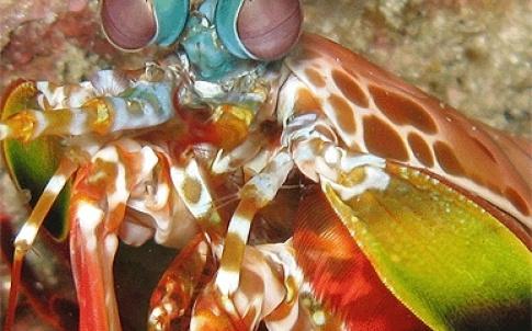 /m/q/v/TE_shrimp.jpg