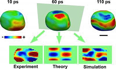 The acoustic phonons can be visualized on the surface as regions of contraction (blue) and expansion (red). Also shown are two-dimensional images comparing the experimental results with theory and molecular dynamics simulation. The scale bar is 100 nanome