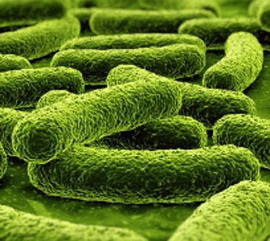 how to detect bacteria in food