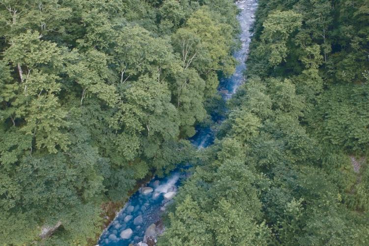 /r/c/n/forest.jpg