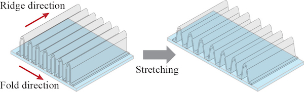 The dimensions of each ridge directly affect the transparent conductor's stretchability.