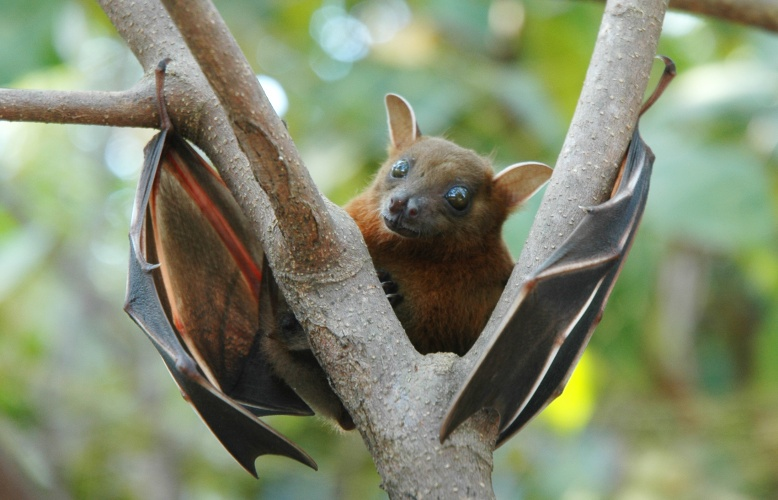 The system mimics the ultrasonic communication used by bats and dolphins.