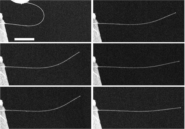 A time-lapse series of images of a nanowire exhibiting anelasticity. At top left, the image shows a nanowire bent almost in half, and then 5 seconds after release (middle left), 10 seconds (bottom left), 60 seconds (top right), 10 minutes (middle right),