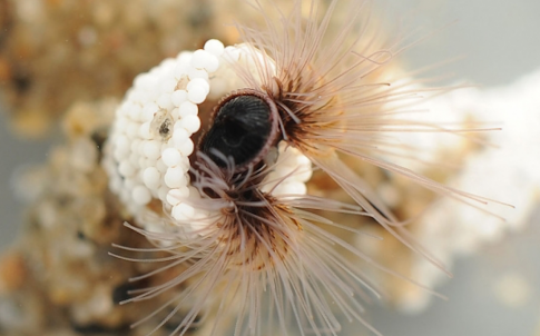 Sandcastle_Worm