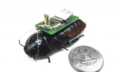 Recent research has seen cockroaches controlled by external electronics
