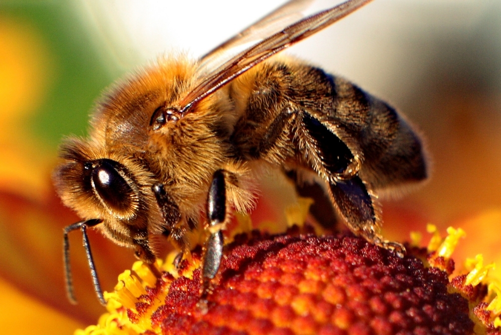 How does a honbeybee navigate her way to a flower through crowded airspace?