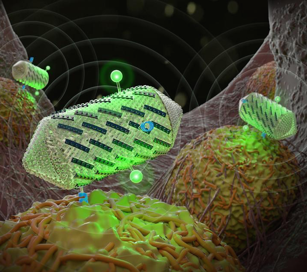 Gas vesicles – which can be engineered with proteins to improve ultrasound methods - can help detect specific cell types and create multicolour images (Credit: Barth van Rossum for Caltech)