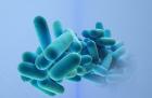 Antibacterial graphene halts growth of biofilms