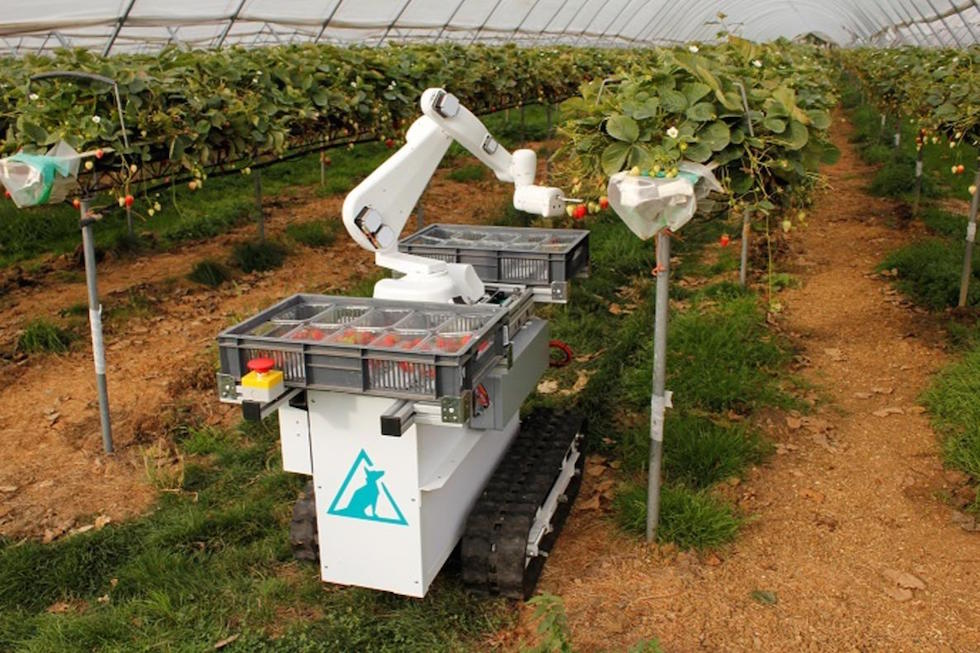 Red harvest: robot farmers find sweet spot for strawberries