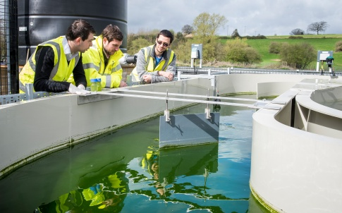 Algae wastewater treatment