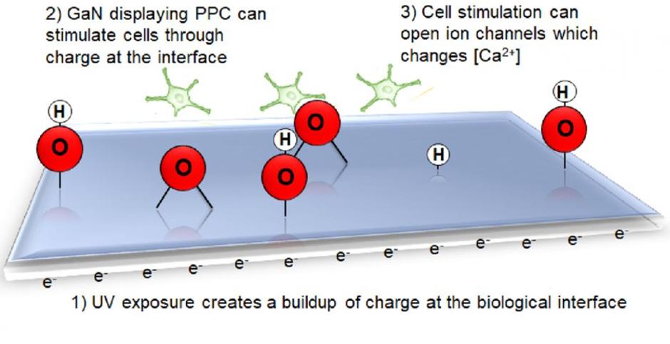 bioelectronic