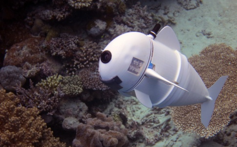 SoFi soft robotic fish (MIT CSAIL)