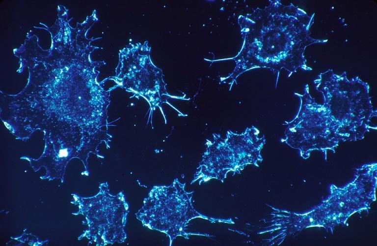 Biocompatible nanotubes