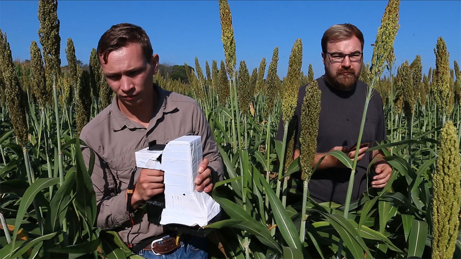Handheld sensor helps farmers monitor crops with precision