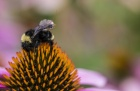 Bionic bumblebee backpacks to collect data for IoT smart farms