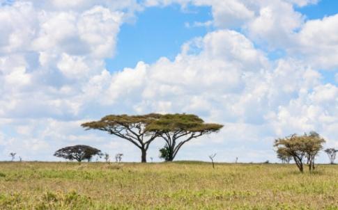 tanzania africa