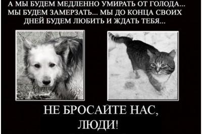 Мы живем в таком мире, где звери, как люди, а люди, как звери...