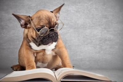 Собаки понимают нас с полуслова