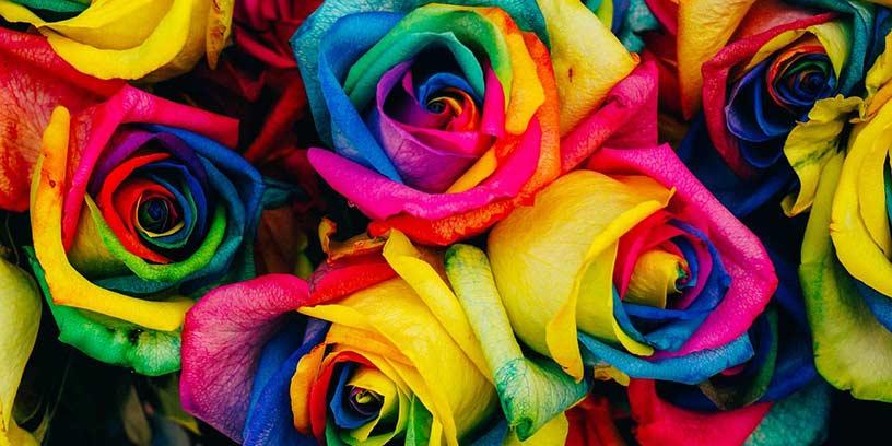 rosor-farg-motivera