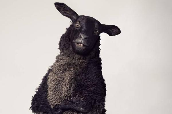 Tele 2:s kampanj med fåret Frank i huvurollen får högt betyg av svenska kommunikatörer.