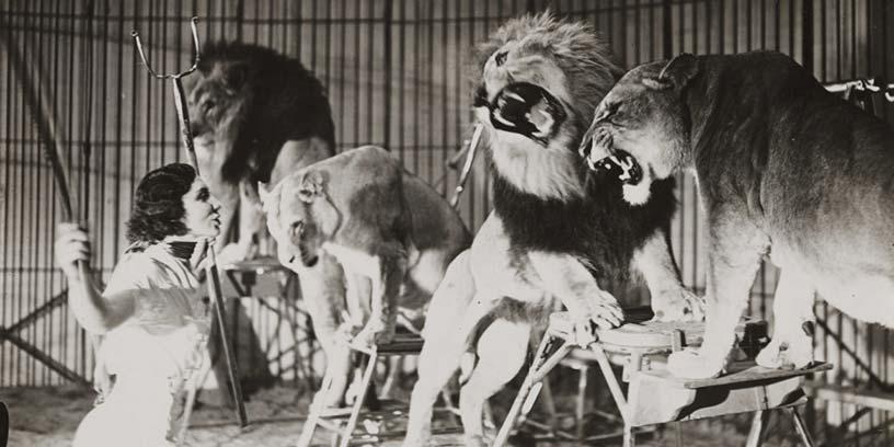 metoder-hantera-konflikter-lejon-tamjare-svartvit