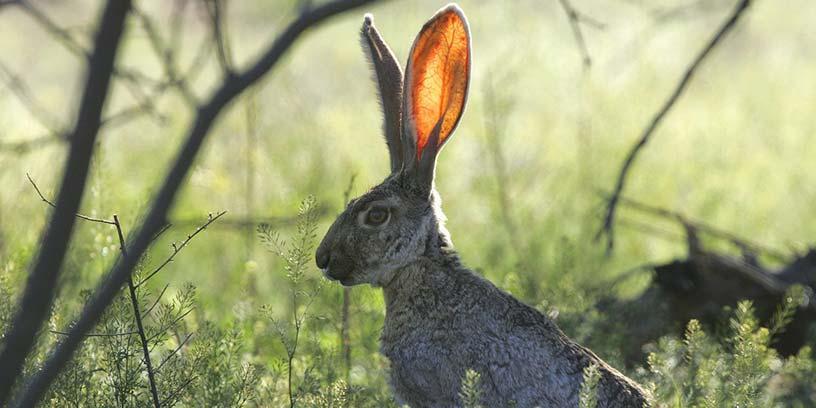 metoder-kommunicera-hare-kanin