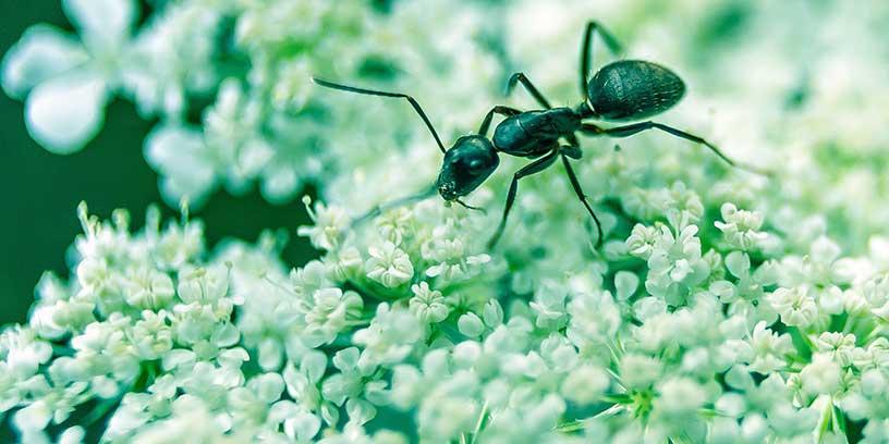 myra-blomma-metoder-na-resultat