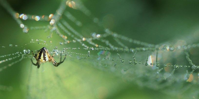 spindel-i-natet