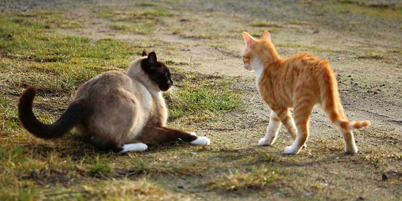 katt-passivt-aggressiv