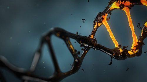 Ile chromosomów ma człowiek?