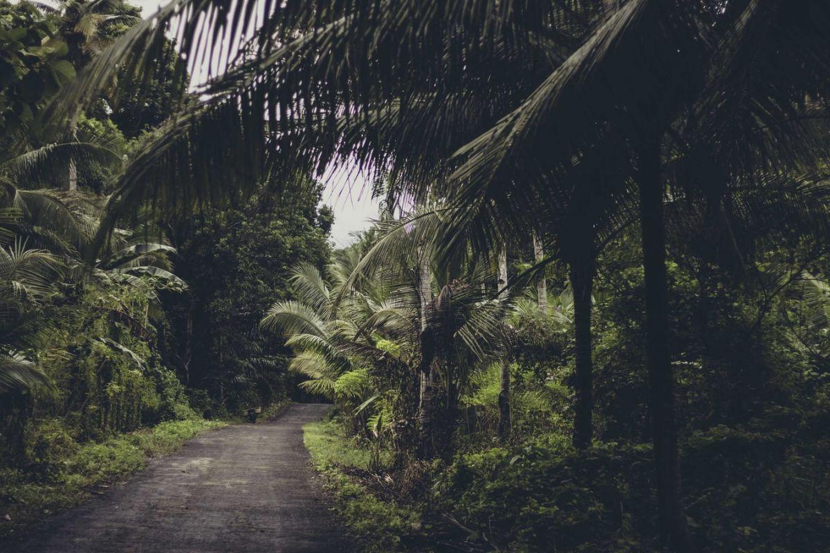 Tropikalne lasy równikowe