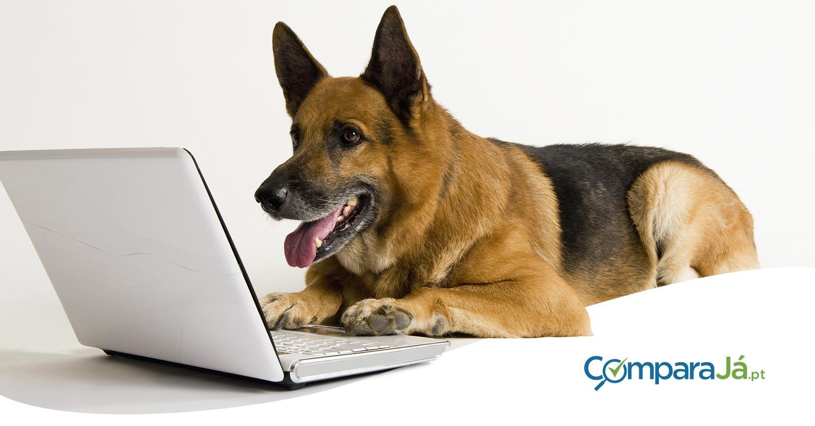 Seguros para cães: a oferta para raças perigosas