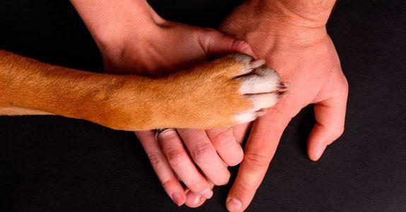 Seguros para animais domésticos: qual a oferta do mercado?